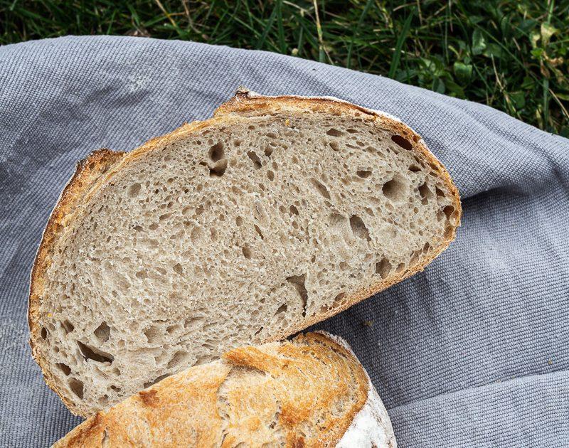 Brote für Brotbackstarter Nr. 7: Das Graue & Einfache